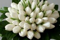 Bukiet ślubny z białych tulipanów